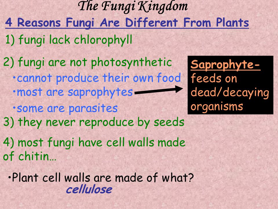 The Fungi Kingdom 1) fungi lack chlorophyll 2) fungi are not photosynthetic cannot produce their own food 3) they never reproduce by seeds 4) most fungi have cell walls made of chitin… 4 Reasons Fungi Are Different From Plants cellulose Plant cell walls are made of what.