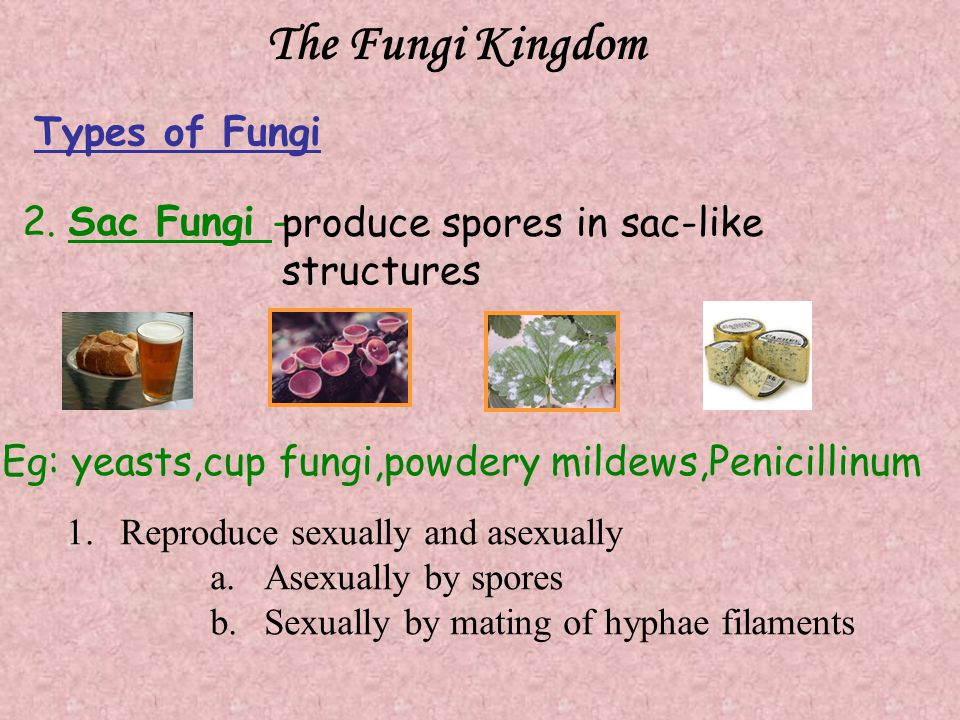 The Fungi Kingdom 2.