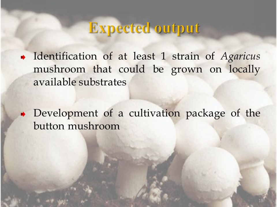 Identification of at least 1 strain of Agaricus mushroom that could be grown on locally available substrates Development of a cultivation package of the button mushroom 18
