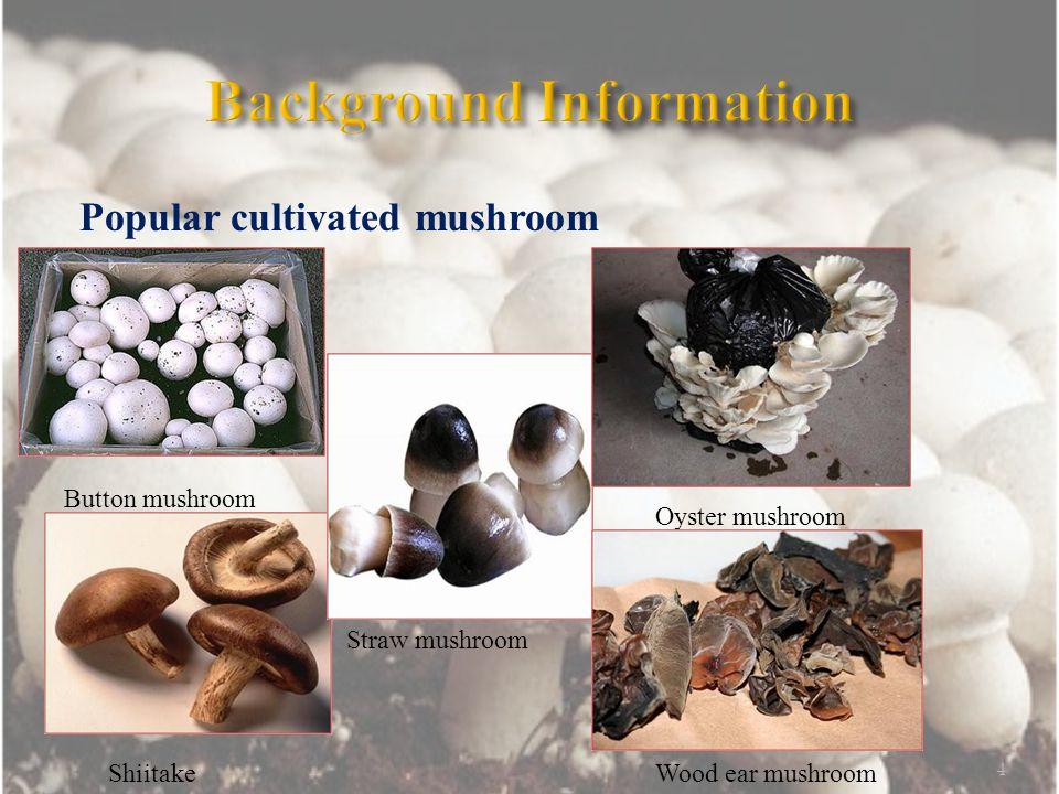 Popular cultivated mushroom 4 Button mushroom Shiitake Straw mushroom Wood ear mushroom Oyster mushroom