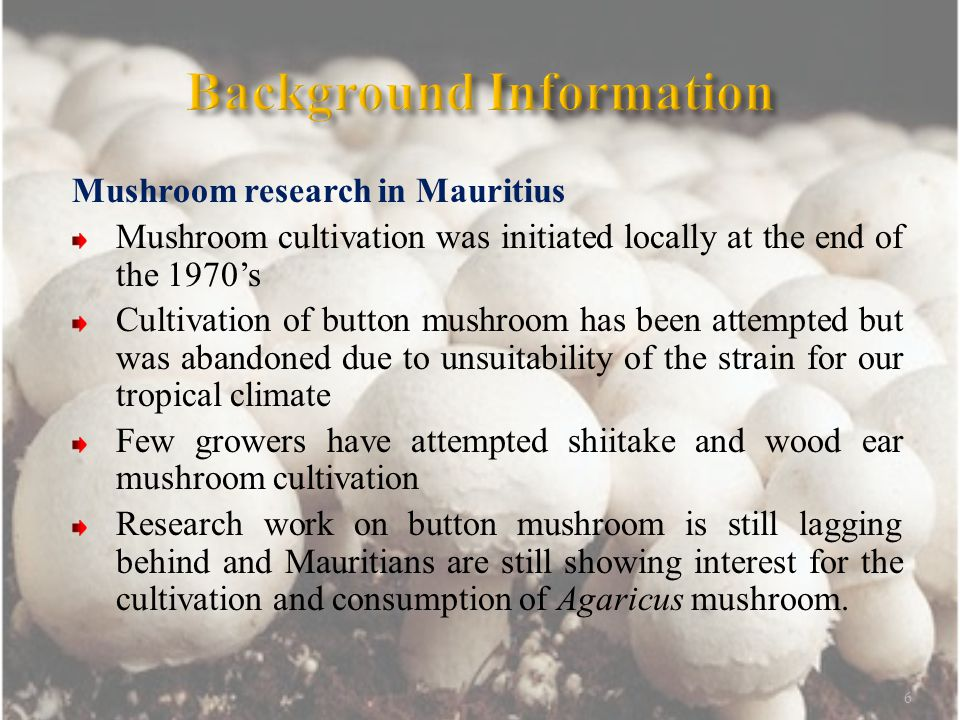 Mushroom research in Mauritius Mushroom cultivation was initiated locally at the end of the 1970's Cultivation of button mushroom has been attempted but was abandoned due to unsuitability of the strain for our tropical climate Few growers have attempted shiitake and wood ear mushroom cultivation Research work on button mushroom is still lagging behind and Mauritians are still showing interest for the cultivation and consumption of Agaricus mushroom.