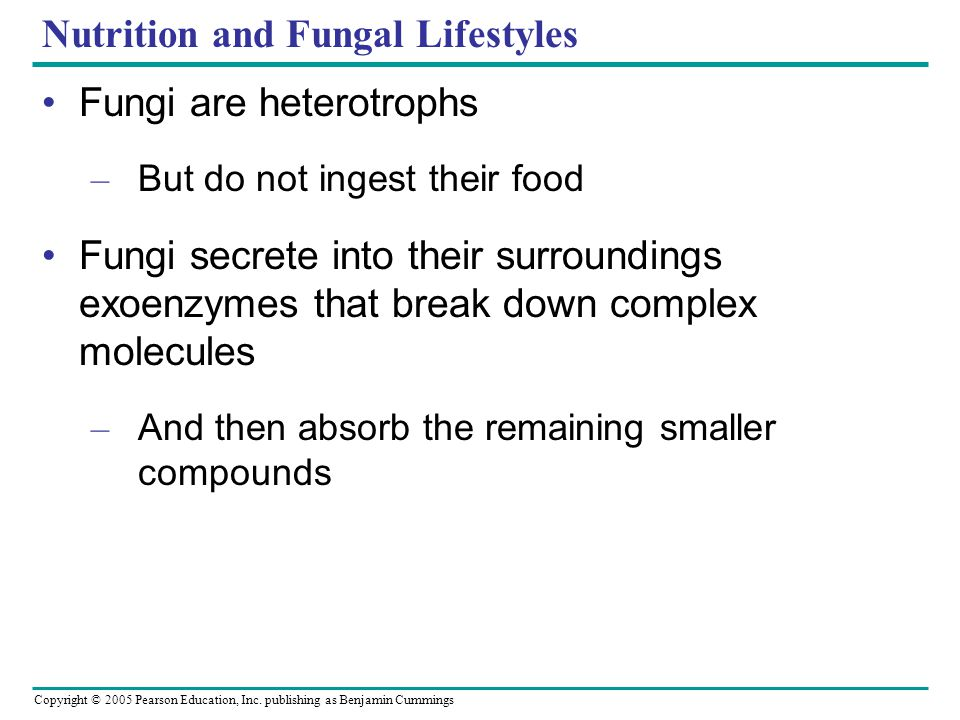Copyright © 2005 Pearson Education, Inc. publishing as Benjamin Cummings Nutrition and Fungal Lifestyles Fungi are heterotrophs – But do not ingest th