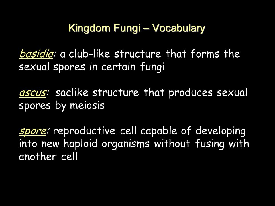 Kingdom Fungi – Vocabulary basidia: a club-like structure that forms the sexual spores in certain fungi ascus: saclike structure that produces sexual