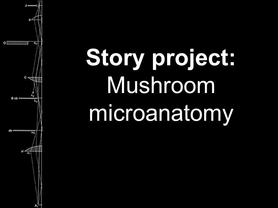 Story project: Mushroom microanatomy