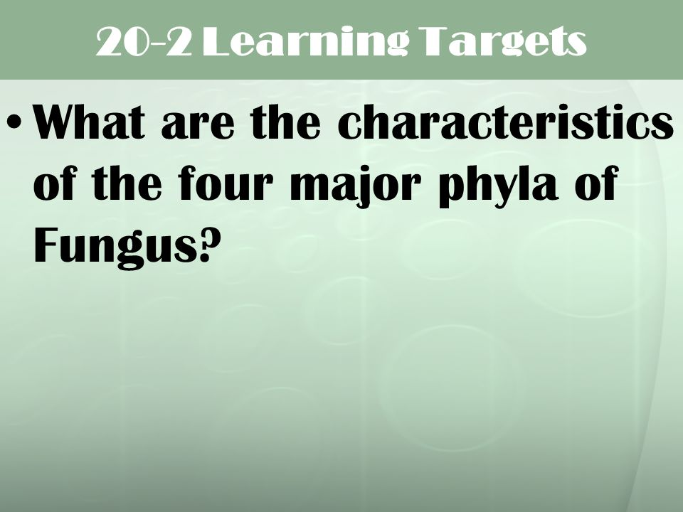 20-2 Learning Targets What are the characteristics of the four major phyla of Fungus?
