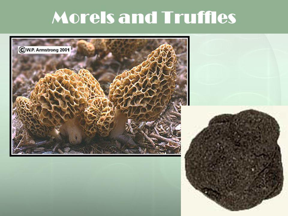 Morels and Truffles