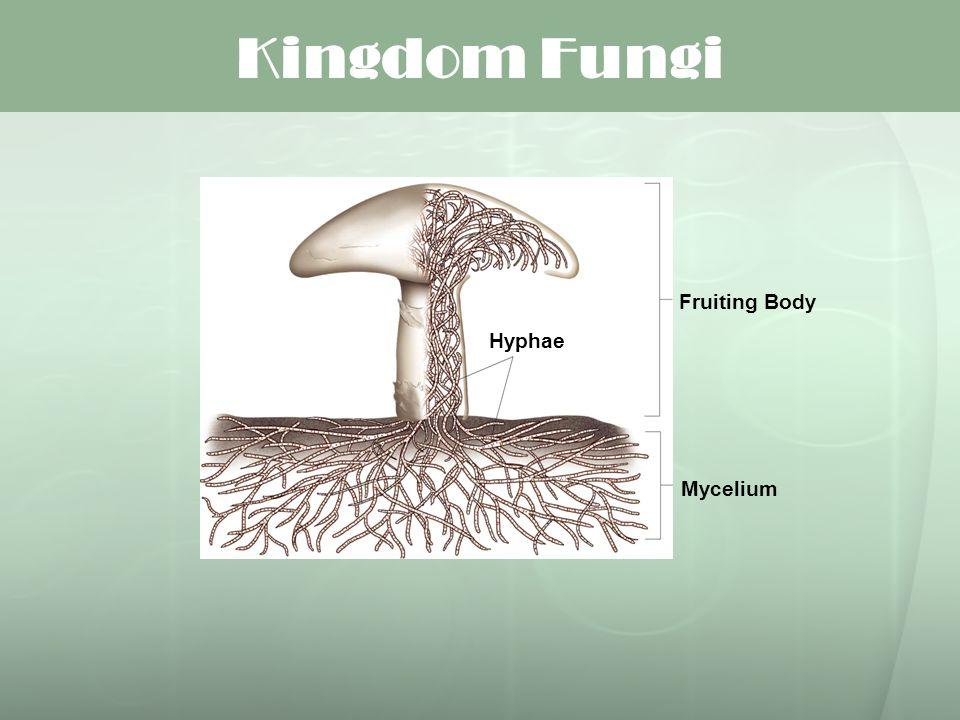 Kingdom Fungi Mycelium Fruiting Body Hyphae