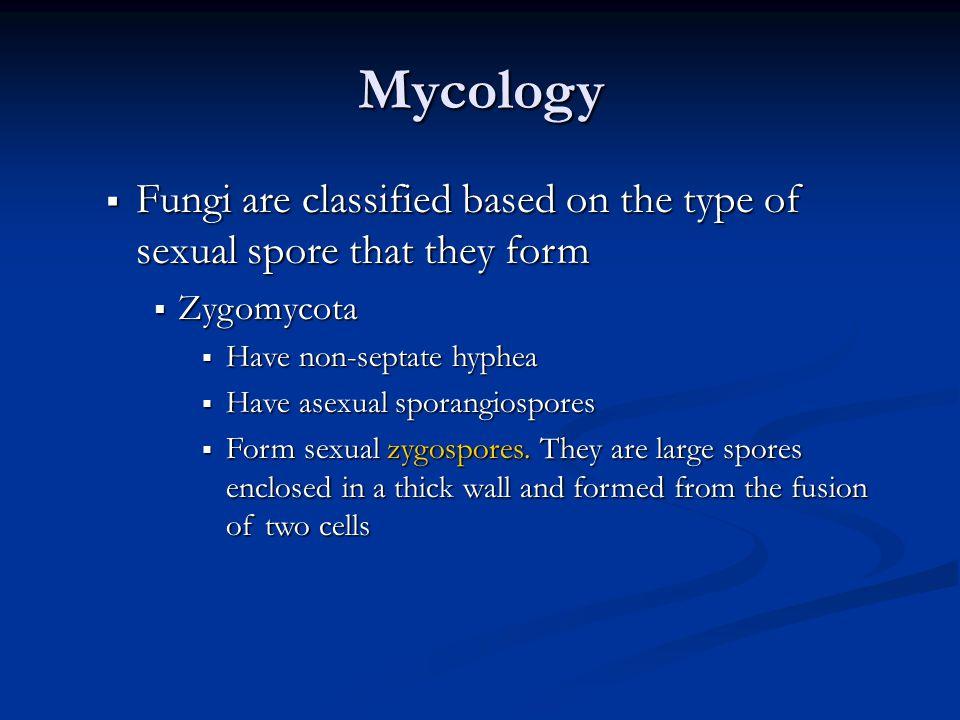 Classification Fungi based on there sexual reproduction : Zygomycetes: zygospores, ex. Mucor & Rhizopus Rhizopus Mucor