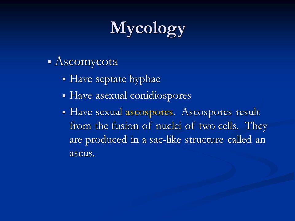 Ascomycetes : Ascospores, ex: saccharomyces, Aspergillus & Penicillium Yeast AspergillusPenicillium