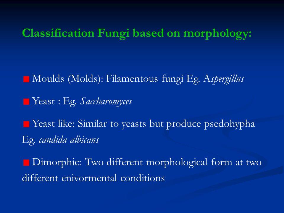 Deuteromycetes: not produce any sexual spores, ex.: Monilia fungi & Botrytis Monilia fungiBotrytis