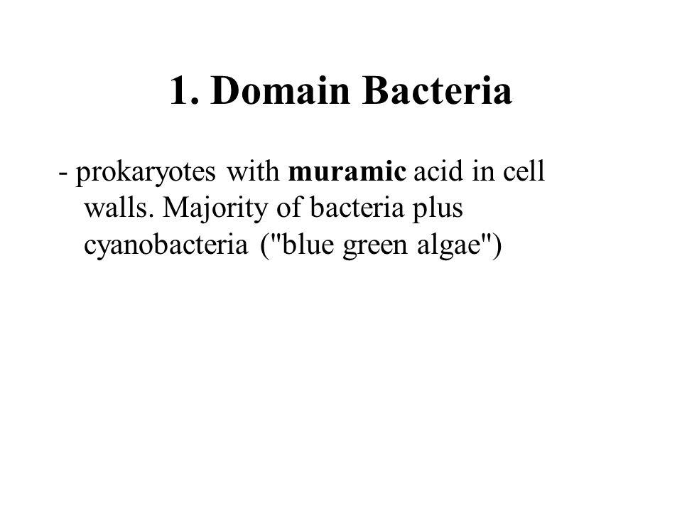 1. Domain Bacteria - prokaryotes with muramic acid in cell walls.