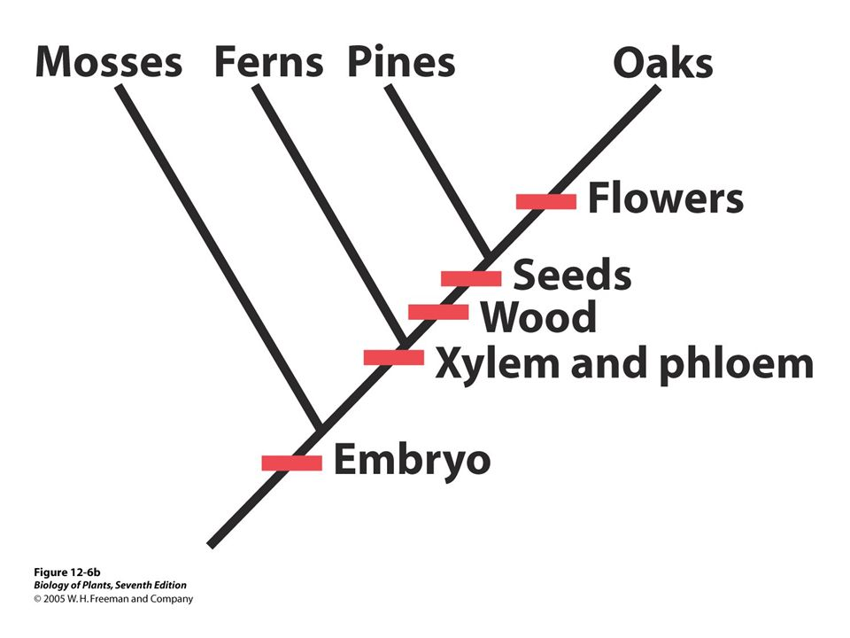 Kingdom Plantae (Plants) - nonmotile, multicellular, plastids and autotrophic via photosynthesis, cell walls made of cellulose, adapted for life on land, mostly sexual reproduction.