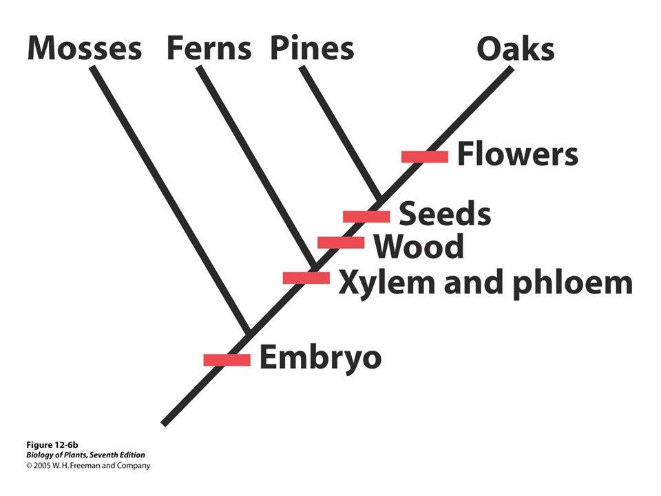 Development of classification A.