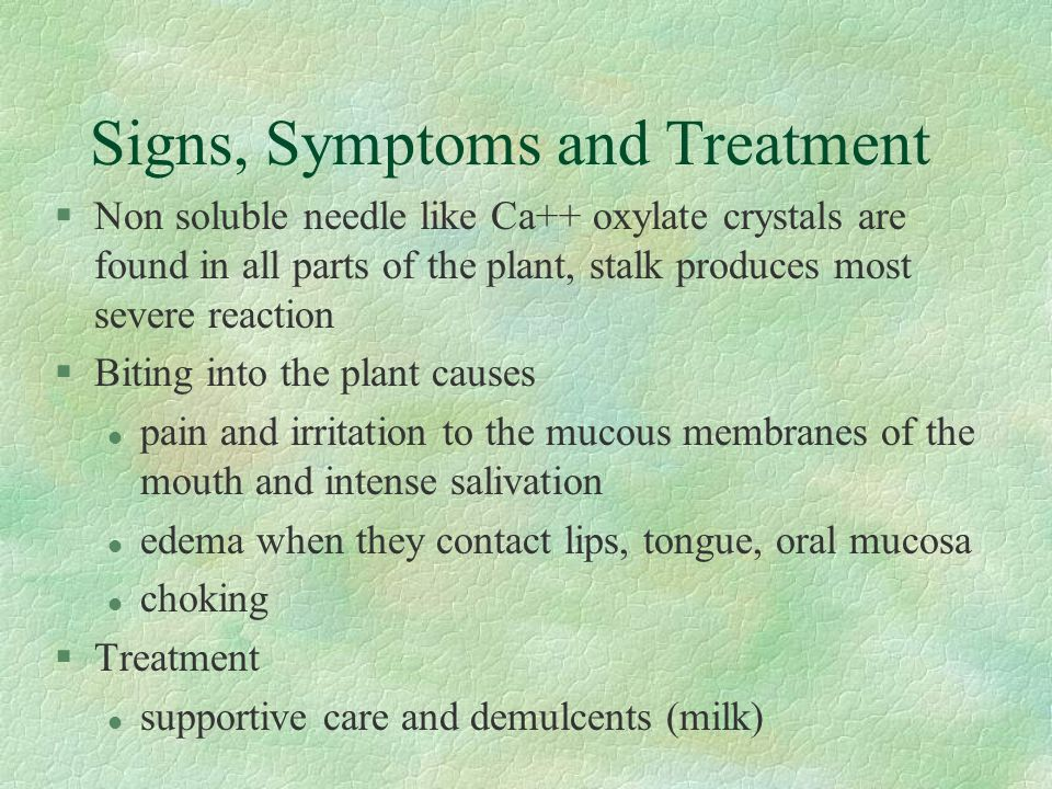 Signs, Symptoms and Treatment §Non soluble needle like Ca++ oxylate crystals are found in all parts of the plant, stalk produces most severe reaction