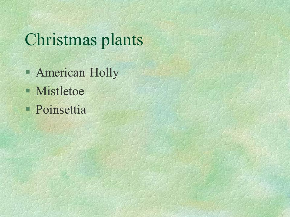 Christmas plants §American Holly §Mistletoe §Poinsettia