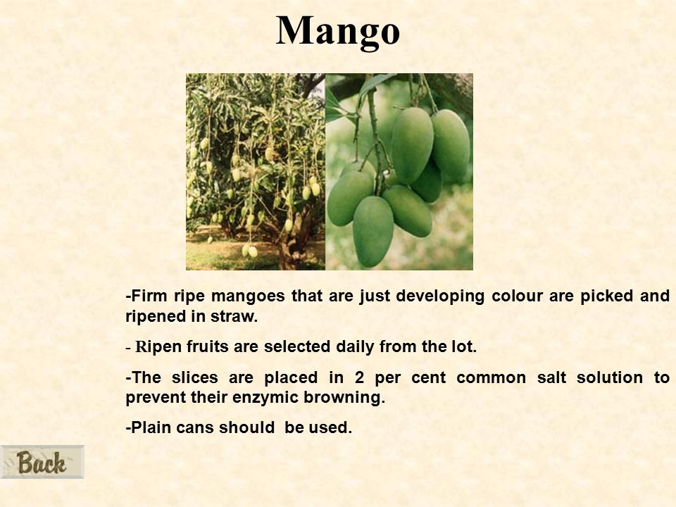 Mango -Firm ripe mangoes that are just developing colour are picked and ripened in straw.