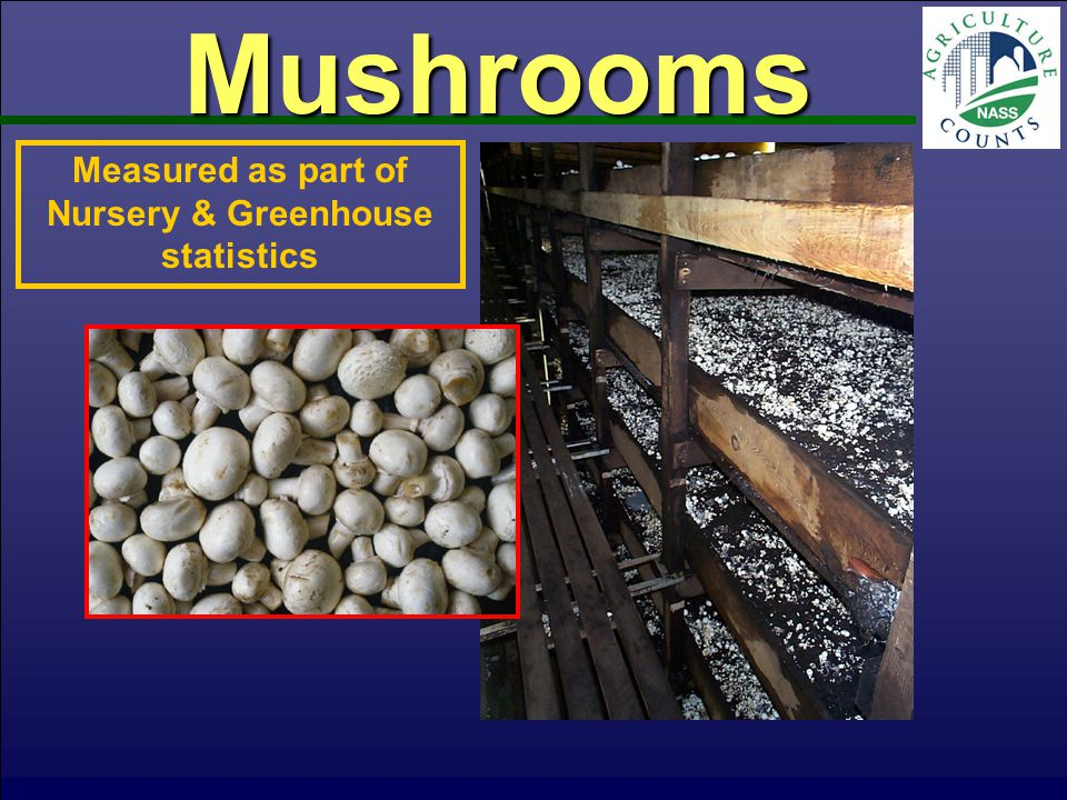 Mushrooms Measured as part of Nursery & Greenhouse statistics