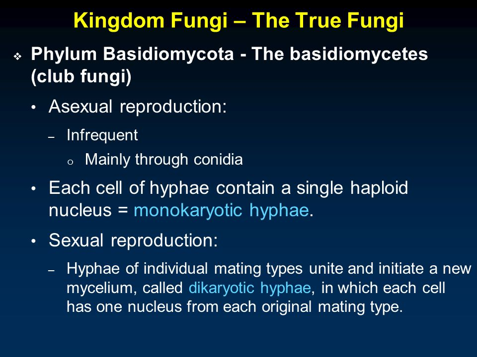 Kingdom Fungi – The True Fungi  Phylum Basidiomycota - The basidiomycetes (club fungi) Asexual reproduction: – Infrequent o Mainly through conidia Each cell of hyphae contain a single haploid nucleus = monokaryotic hyphae.
