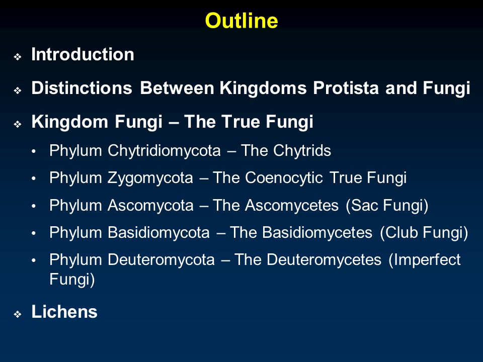Outline  Introduction  Distinctions Between Kingdoms Protista and Fungi  Kingdom Fungi – The True Fungi Phylum Chytridiomycota – The Chytrids Phylum Zygomycota – The Coenocytic True Fungi Phylum Ascomycota – The Ascomycetes (Sac Fungi) Phylum Basidiomycota – The Basidiomycetes (Club Fungi) Phylum Deuteromycota – The Deuteromycetes (Imperfect Fungi)  Lichens