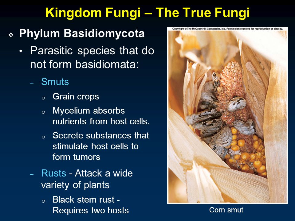 Kingdom Fungi – The True Fungi  Phylum Basidiomycota Parasitic species that do not form basidiomata: – Smuts o Grain crops o Mycelium absorbs nutrients from host cells.