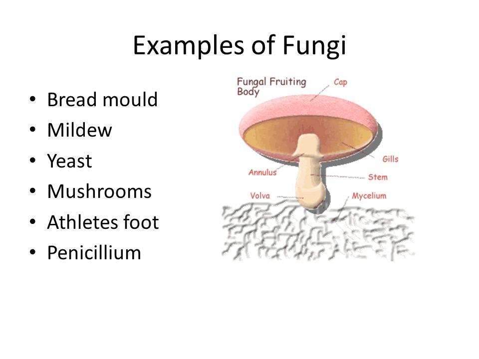 Examples of Fungi Bread mould Mildew Yeast Mushrooms Athletes foot Penicillium