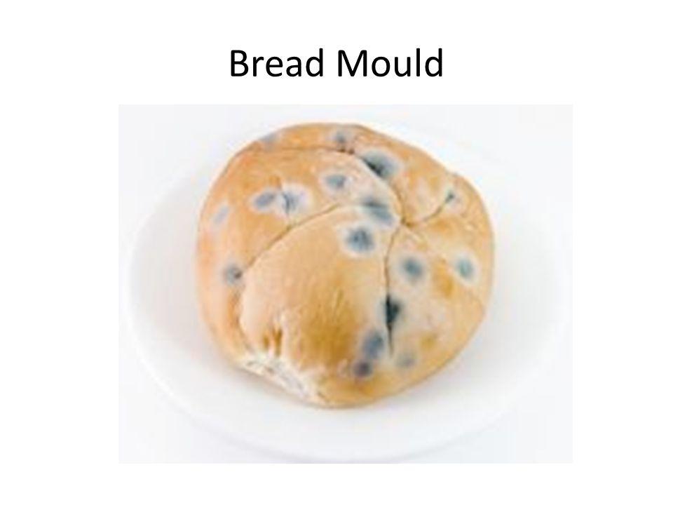 Bread Mould