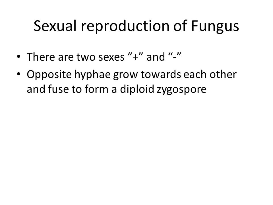 """Sexual reproduction of Fungus There are two sexes """"+"""" and """"-"""" Opposite hyphae grow towards each other and fuse to form a diploid zygospore"""