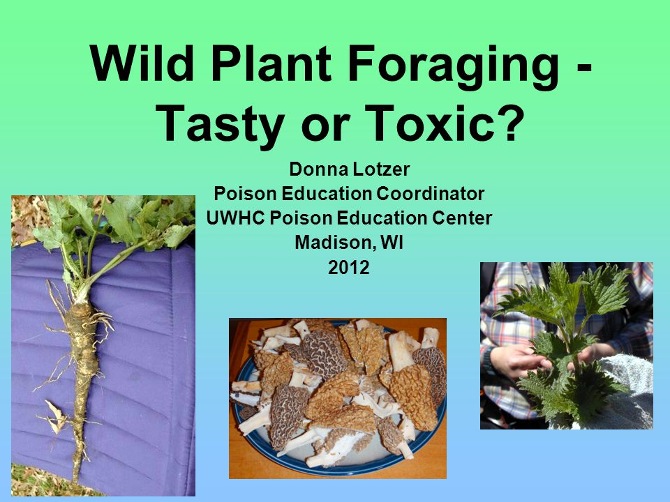 Wild Plant Foraging - Tasty or Toxic.