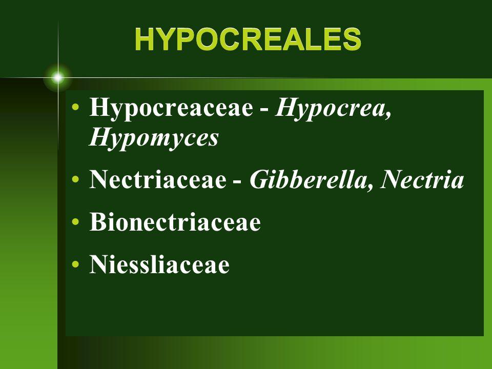 HYPOCREALES Hypocreaceae - Hypocrea, Hypomyces Nectriaceae - Gibberella, Nectria Bionectriaceae Niessliaceae