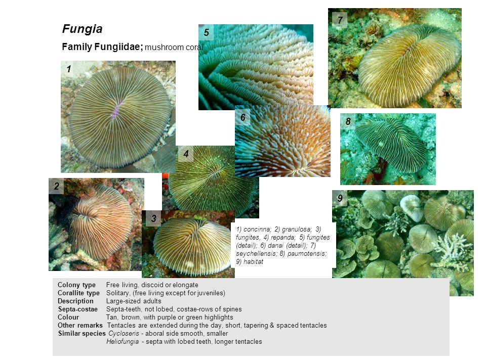 Fungia 1) concinna; 2) granulosa; 3) fungites, 4) repanda; 5) fungites (detail); 6) danai (detail); 7) seychellensis; 8) paumotensis; 9) habitat 1 2 3