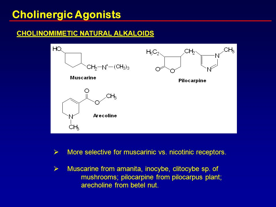 CHOLINOMIMETIC NATURAL ALKALOIDS  More selective for muscarinic vs. nicotinic receptors.  Muscarine from amanita, inocybe, clitocybe sp. of mushroom