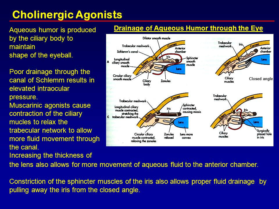 Drainage of Aqueous Humor through the Eye Aqueous humor is produced by the ciliary body to maintain shape of the eyeball. Poor drainage through the ca