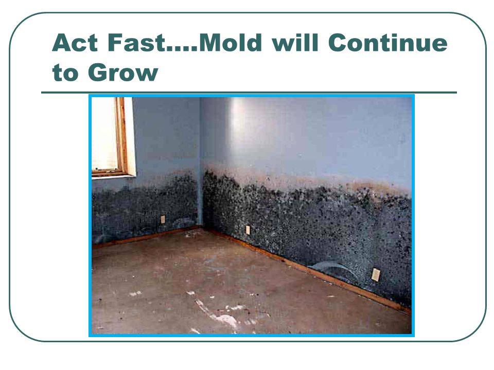 Act Fast….Mold will Continue to Grow