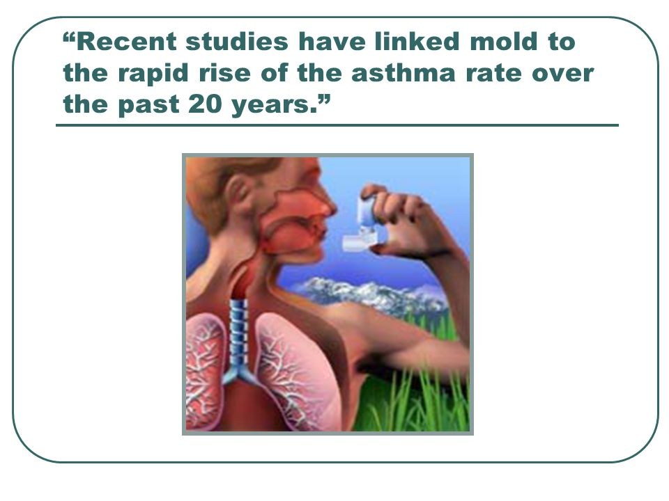 Recent studies have linked mold to the rapid rise of the asthma rate over the past 20 years.