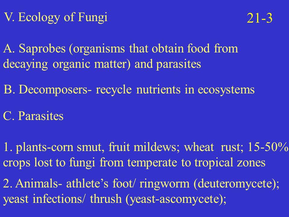V.Ecology of Fungi 21-3 A.