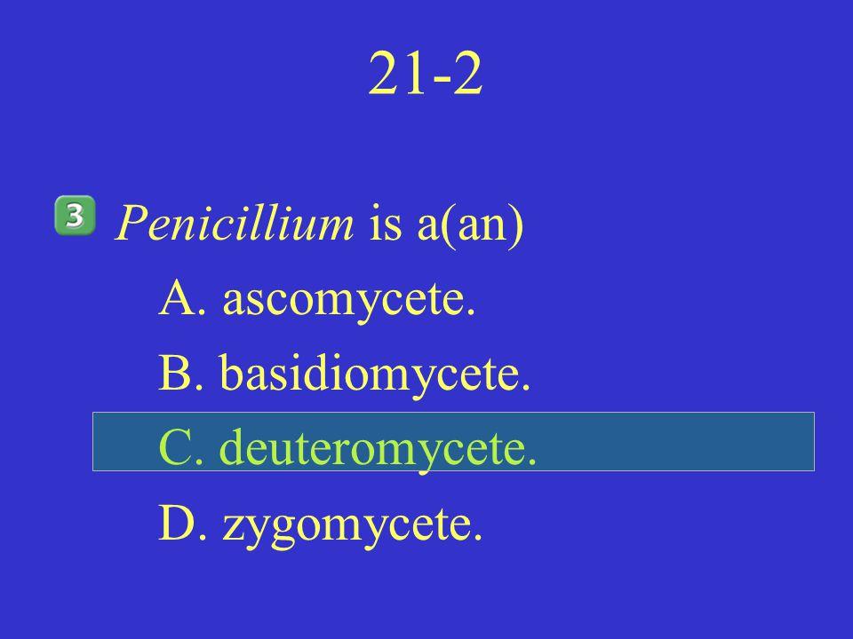 21-2 Penicillium is a(an) A. ascomycete. B. basidiomycete. C. deuteromycete. D. zygomycete.
