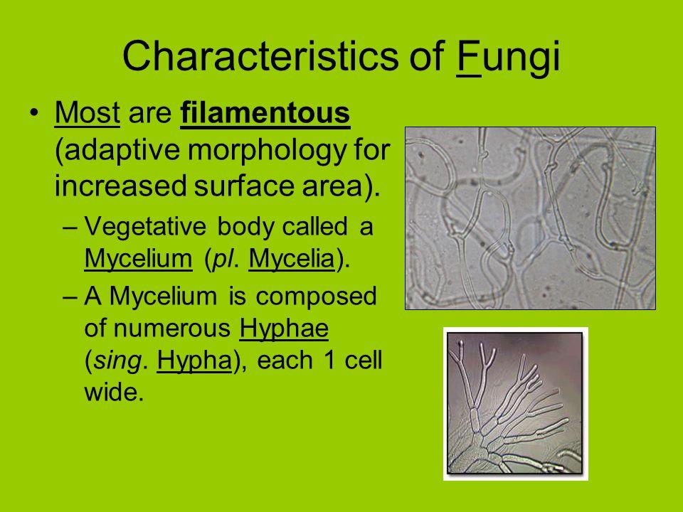 Characteristics of Fungi Most are filamentous (adaptive morphology for increased surface area).