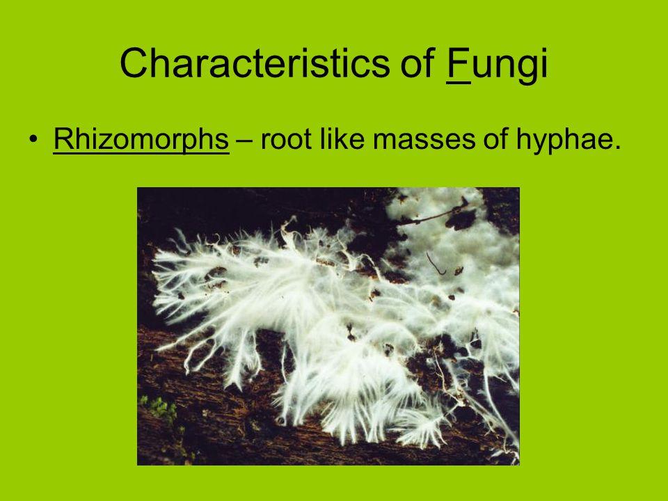 Characteristics of Fungi Rhizomorphs – root like masses of hyphae.