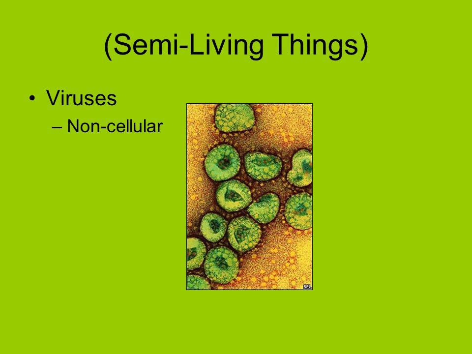 (Semi-Living Things) Viruses –Non-cellular