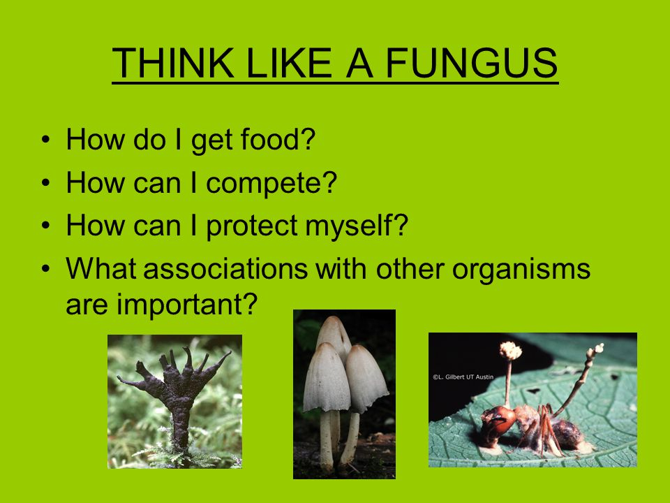 THINK LIKE A FUNGUS How do I get food? How can I compete? How can I protect myself? What associations with other organisms are important?