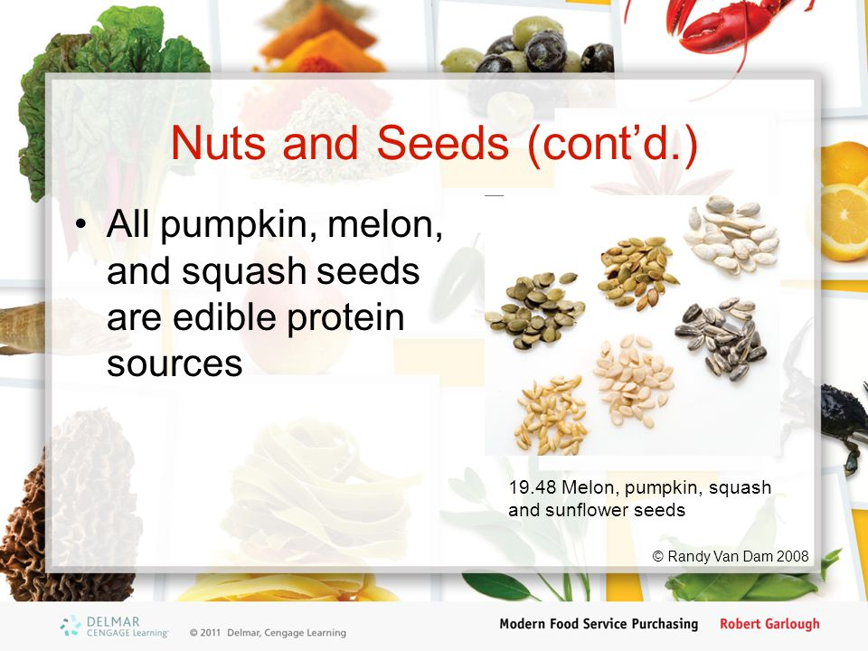 Nuts and Seeds (cont'd.) All pumpkin, melon, and squash seeds are edible protein sources © Randy Van Dam 2008 19.48 Melon, pumpkin, squash and sunflower seeds
