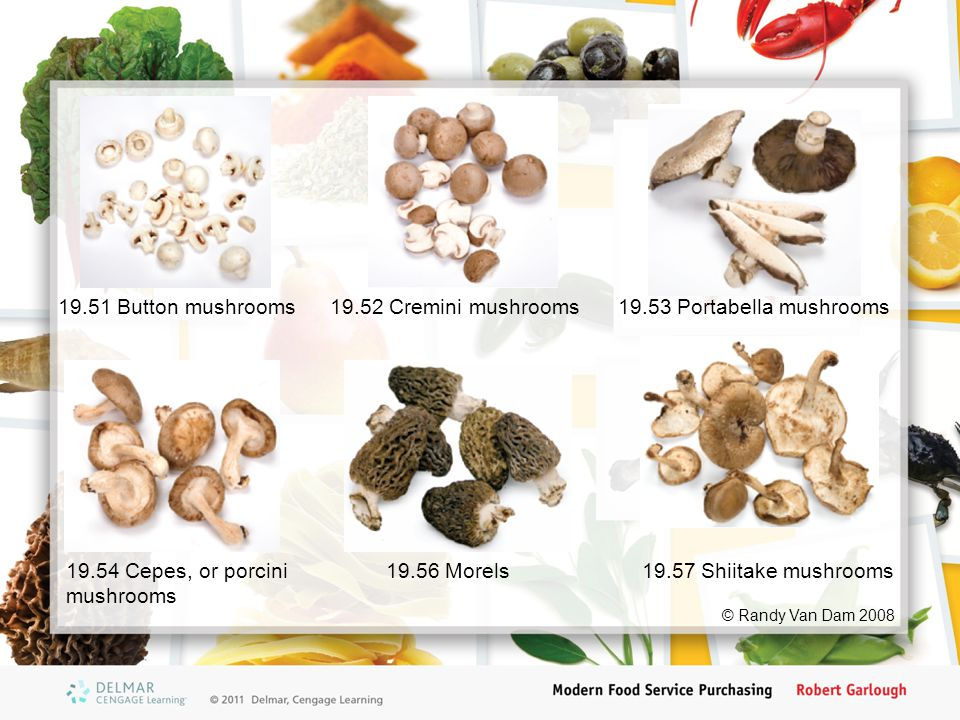 © Randy Van Dam 2008 19.51 Button mushrooms19.52 Cremini mushrooms19.53 Portabella mushrooms 19.54 Cepes, or porcini mushrooms 19.56 Morels19.57 Shiitake mushrooms