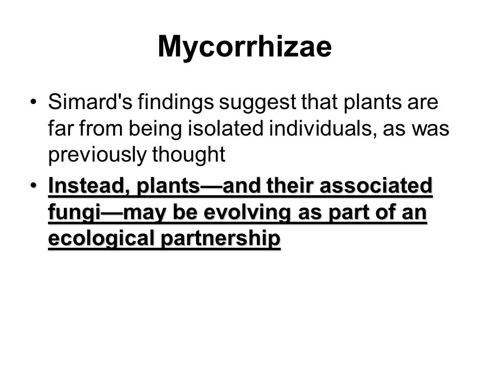 Mycorrhizae Simard's findings suggest that plants are far from being isolated individuals, as was previously thought Instead, plants—and their associa