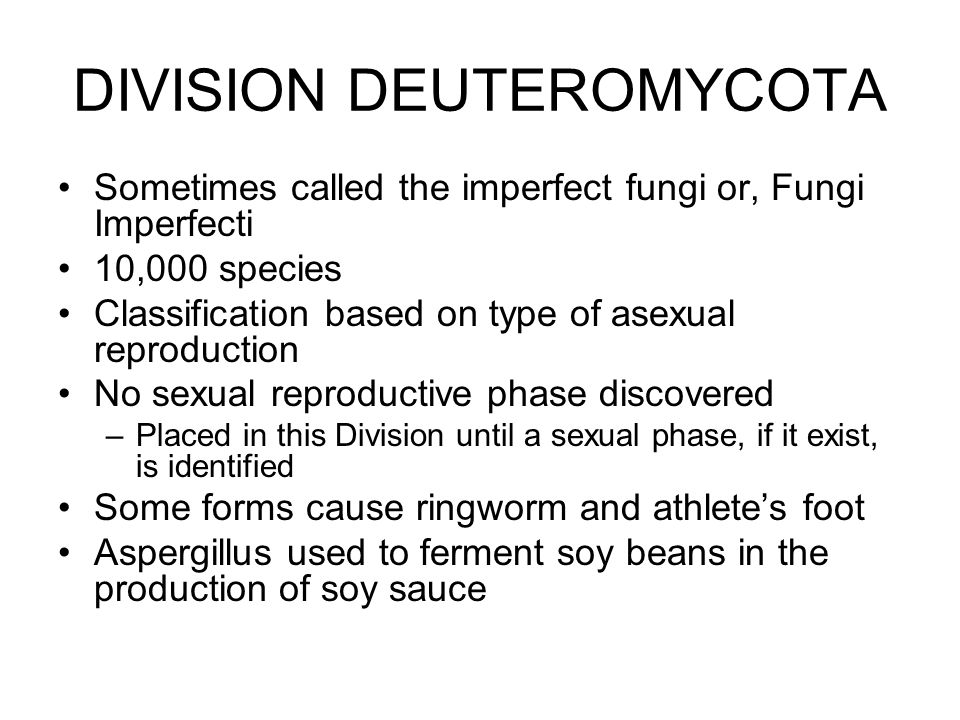 DIVISION DEUTEROMYCOTA Sometimes called the imperfect fungi or, Fungi Imperfecti 10,000 species Classification based on type of asexual reproduction N