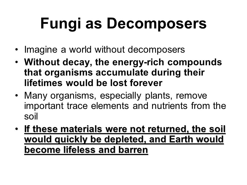 Fungi as Decomposers Imagine a world without decomposers Without decay, the energy-rich compounds that organisms accumulate during their lifetimes wou