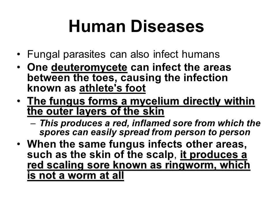 Human Diseases Fungal parasites can also infect humans deuteromyceteOne deuteromycete can infect the areas between the toes, causing the infection kno