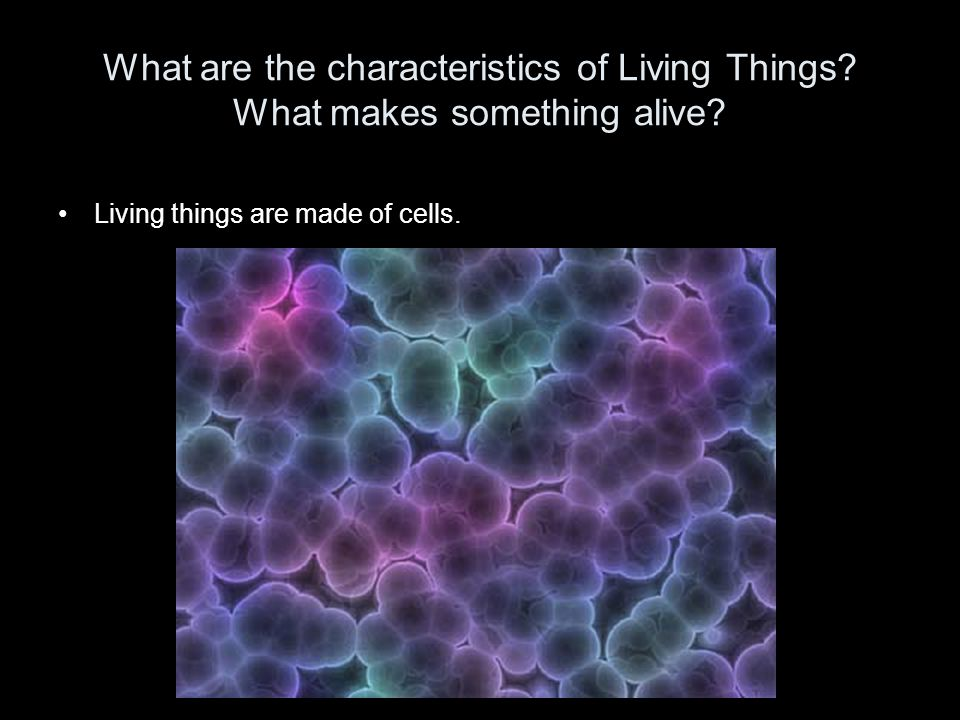 What are the characteristics of Living Things? What makes something alive? Living things are made of cells.