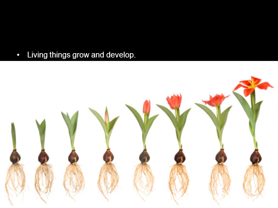Living things grow and develop.