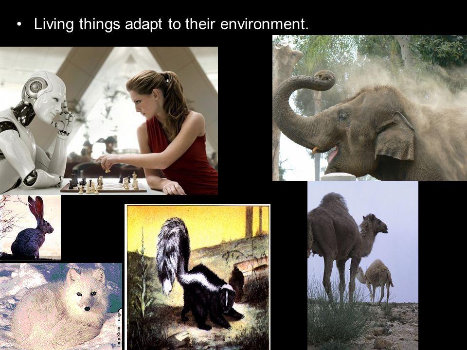 So we need to add the Fungi Kingdom to the Plant Kingdom and the Animal Kingdom.