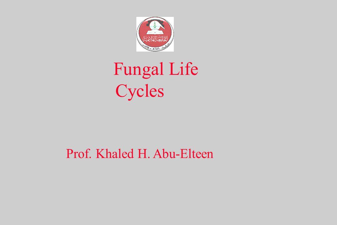 Fungal Life Cycles Prof. Khaled H. Abu-Elteen